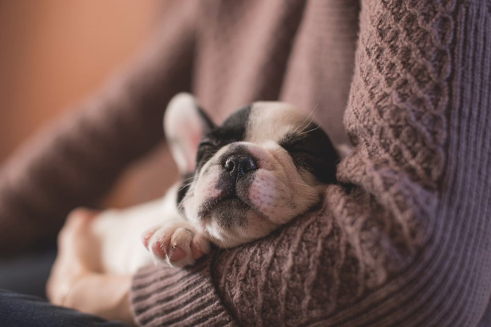 4 Must Haves For a New Puppy
